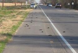 Hundreds of dead blackbirds found near New Roads
