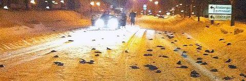 FÅGELSKRÄCK I FALKÖPING Här hittades hundratals döda fåglar.